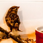 Swallows in rehab