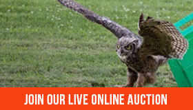 Join Our Live Online Auction