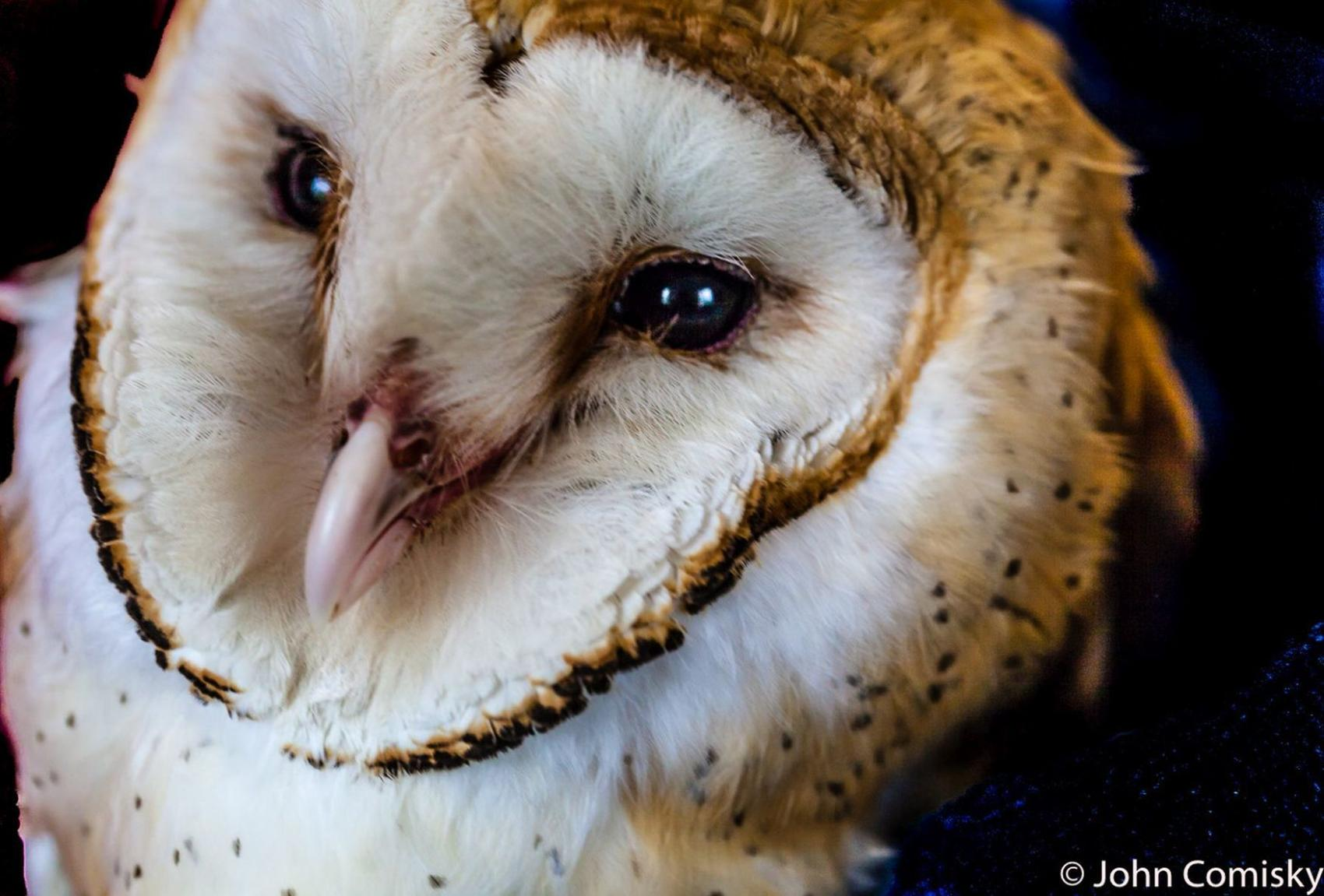 Napa Wildlife Rescue looking for new home